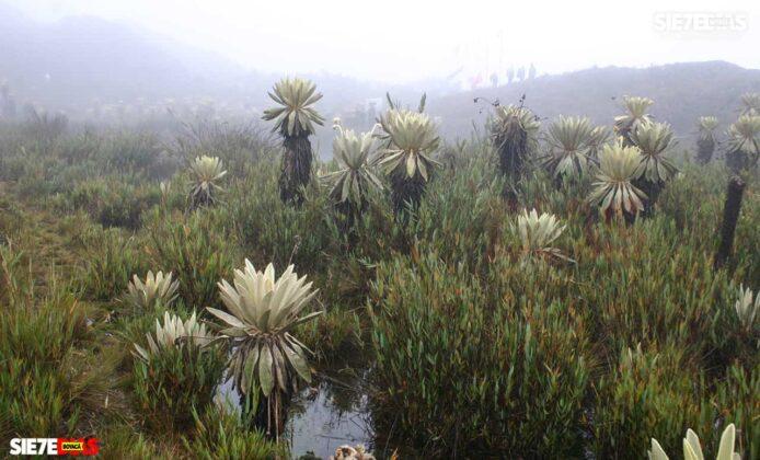 [Galería] - Páramo de Pisba un lugar lleno de historia y biodiversidad - #AlNatural 1
