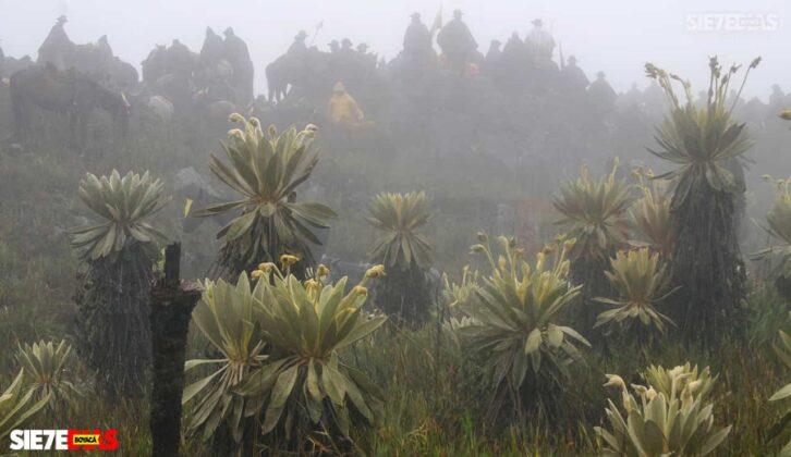 [Galería] - Páramo de Pisba un lugar lleno de historia y biodiversidad - #AlNatural 3