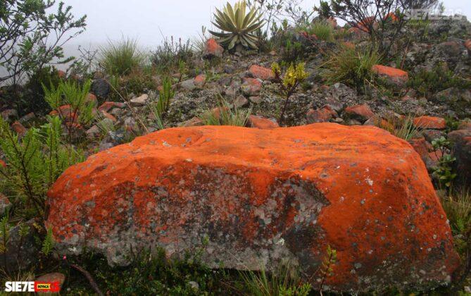 [Galería] - Páramo de Pisba un lugar lleno de historia y biodiversidad - #AlNatural 8