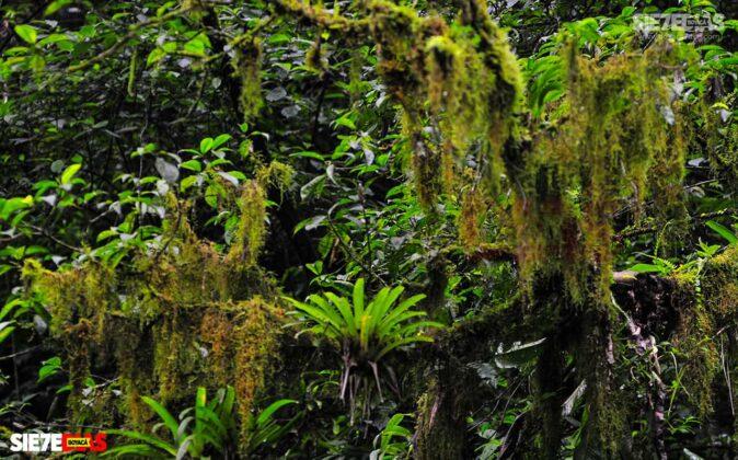 [Galería] - El sendero La Esmeralda, la joya ecoturística del Valle de Tenza #AlNatural 2