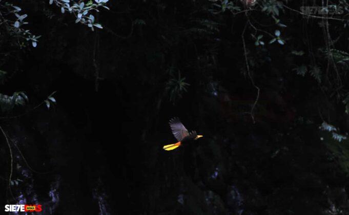 [Galería] - El sendero La Esmeralda, la joya ecoturística del Valle de Tenza #AlNatural 5