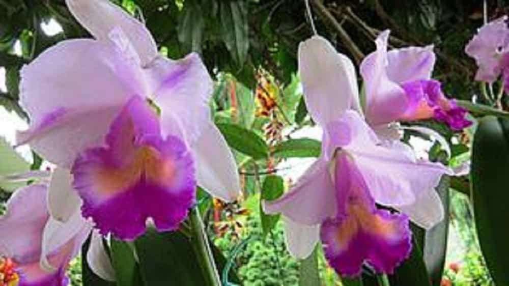 La lista roja de las plantas más amenazadas en Colombia 2