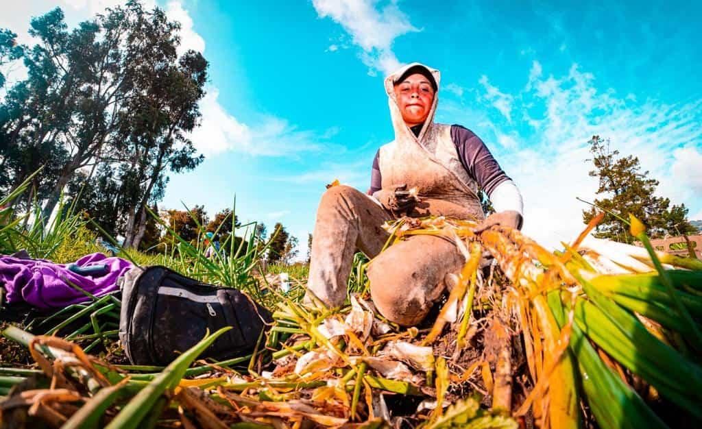 La cosecha, de la tierrita al Icbf y al PAE de Bogotá 1