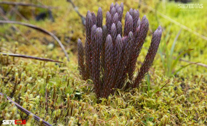 [Galería] - Reserva El Chuscal en El Espino, un lugar para conectarse con la naturaleza 1