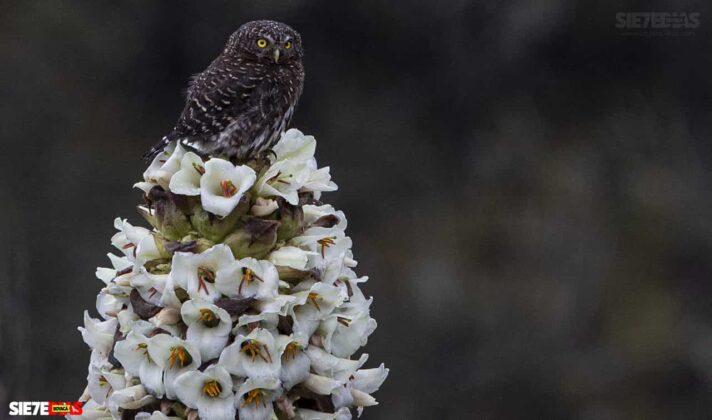 [Galería] - Reserva El Chuscal en El Espino, un lugar para conectarse con la naturaleza 3