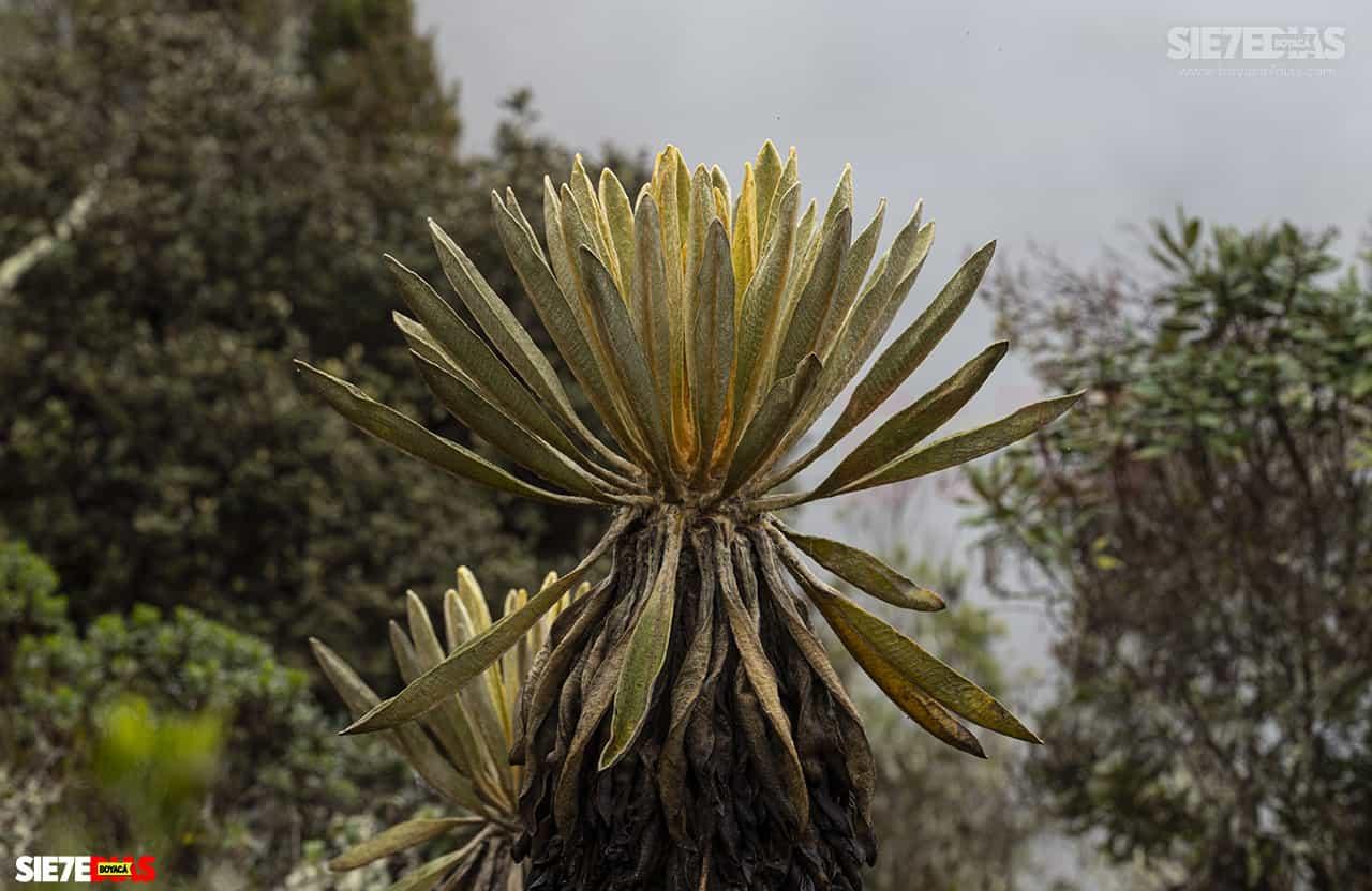 [Galería] - Reserva El Chuscal en El Espino, un lugar para conectarse con la naturaleza 4