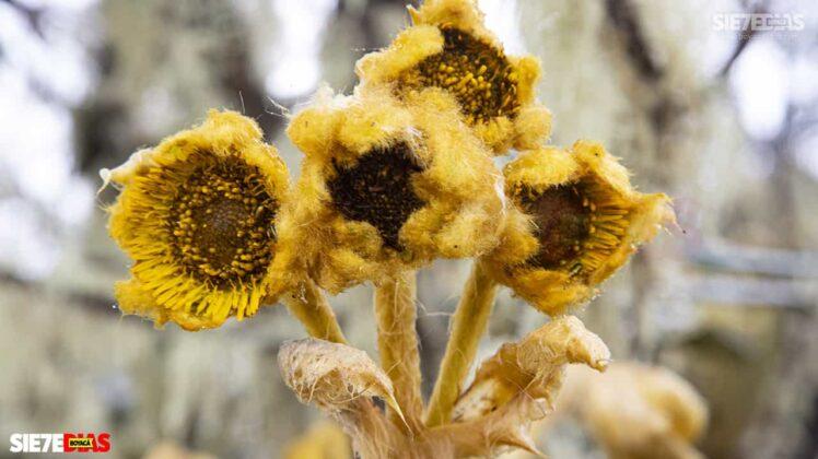 [Galería] - Reserva El Chuscal en El Espino, un lugar para conectarse con la naturaleza 8