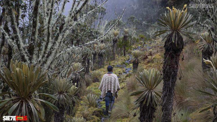 [Galería] - Reserva El Chuscal en El Espino, un lugar para conectarse con la naturaleza 9