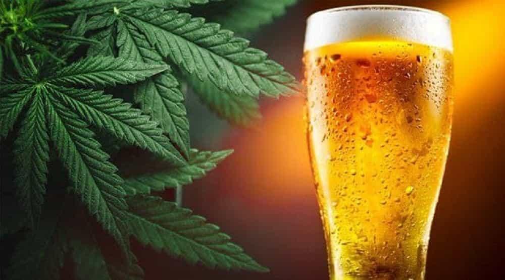 El presidente Duque sugirió usar el cannabis para elaborar cerveza #Tolditos7días 1