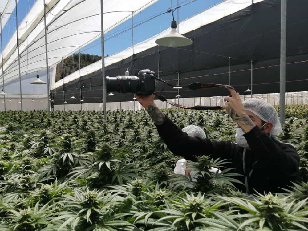 El presidente Duque estará este viernes en Boyacá en un cultivo de cannabis #Tolditos7días 1