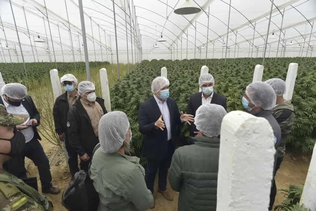 Impresionado quedó Duque con los cultivos de cannabis de Clever Leaves #Tolditos7días 1
