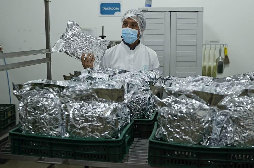 El cannabis medicinal, una oportunidad de oro verde en el campo colombiano 3