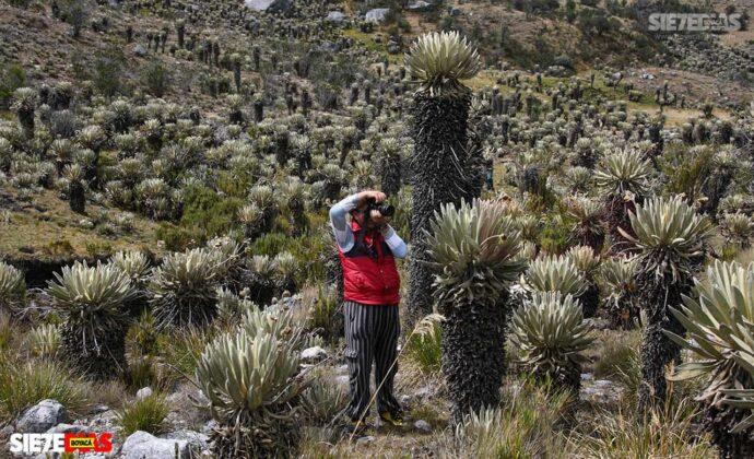 [Galería] - Los frailejones, un atractivo para disfrutar y contemplar en Boyacá #AlNatural 4