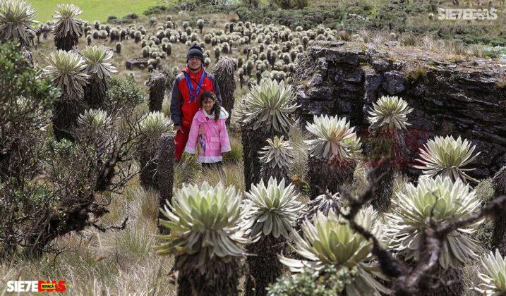 [Galería] - Los frailejones, un atractivo para disfrutar y contemplar en Boyacá #AlNatural 10