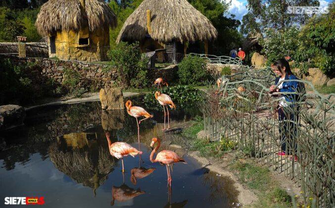 [Galería] - Guátika bioparque, un lugar único en el departamento de Boyacá para disfrutar en familia #AlNatural 5