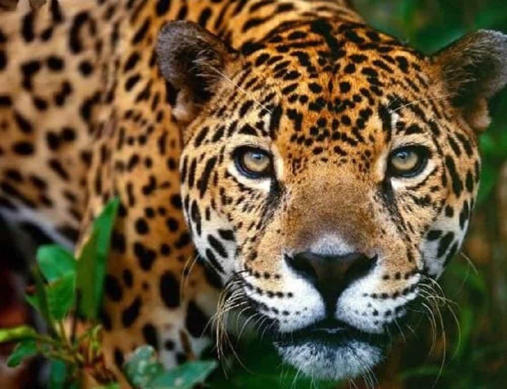 'El mundo no está respondiendo adecuadamente a la crisis de la naturaleza', WWF 1