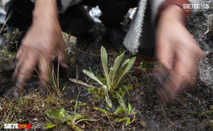 [Galería] - Los frailejones, un atractivo para disfrutar y contemplar en Boyacá #AlNatural 7