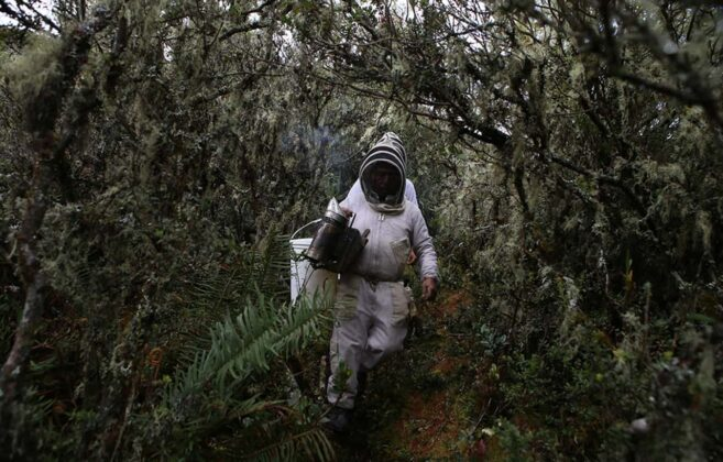 Las abejas africanizadas tampoco son como la describen, no es que sean asesinas, ellas lo que son es muy defensivas y cuando por alguna razón se sienten amenazadas, atacan en masa. Foto: archivo particular.