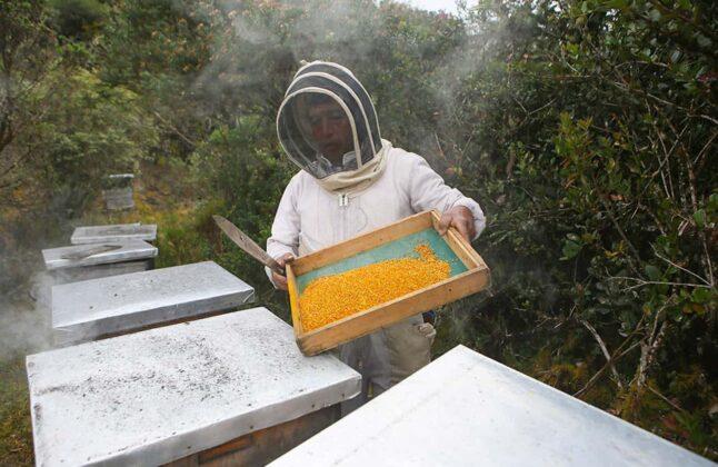 Los municipios en los que hay mayor cantidad de proyectos apícolas son: Duitama, Paipa, Nobsa, Sotaquirá, Miraflores, Zetaquira, Moniquirá, en fin. Foto: archivo particular.
