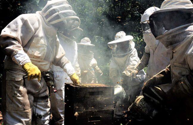 Boyacá ocupa el segundo o tercer lugar en la producción nacional de miel, donde la costa o los llanos llevan la ventaja, pero en la producción de polen, Boyacá es el primero en Colombia. Foto: archivo particular.