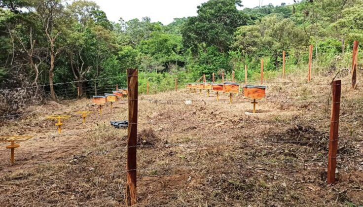 Para ubicar las colmenas primero hay que buscar la zona o la región en la que se van a fijar, verificar que haya fuentes de alimento, que haya bosque nativo quizá, que no vaya a haber un vecino con cultivo de abejas. Foto: archivo particular.