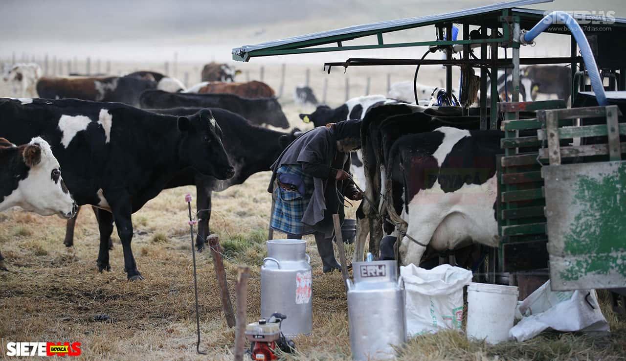 Secretario de Agricultura de Boyacá explica en qué consiste 'el salvavidas' para lecheros del departamento #LaEntrevista7días 2