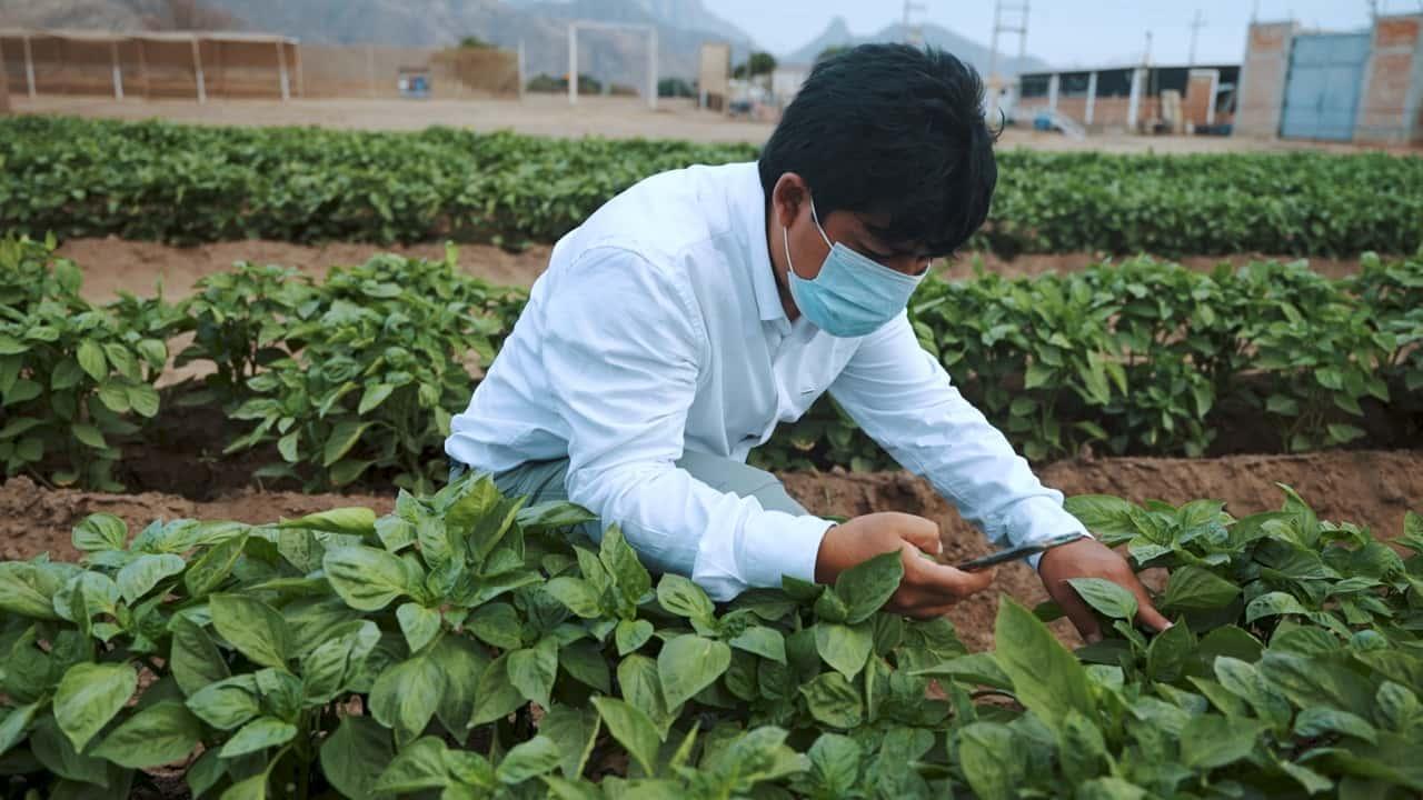 Participa en la convocatoria de innovación abierta para transformar la agroindustria 1