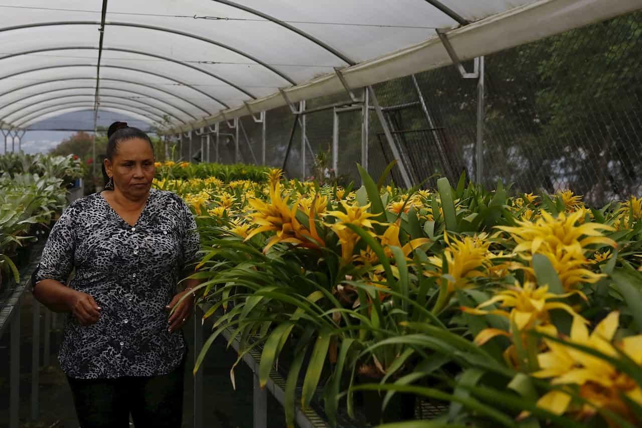 Moravia, el vibrante barrio de Medellín que transformó su basurero en jardín 2