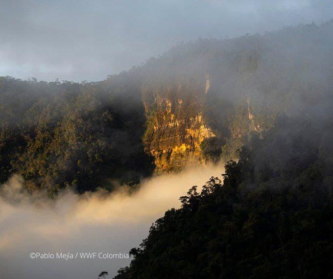 El área hidrográfica del Orinoco cuenta con 347.607 km2, los cuales representan el 30,43 % del territorio nacional, albergando el 48% de los humedales continentales. Foto: Pablo Mejía/WWF Colombia.